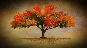 01_autumn.jpg
