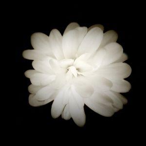 delicate_but_not_frail-c97.jpg