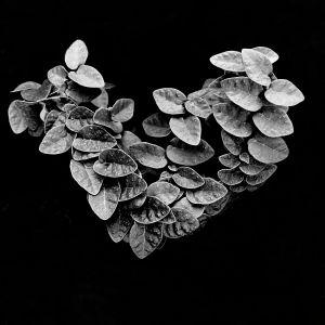ivy_heart.jpg